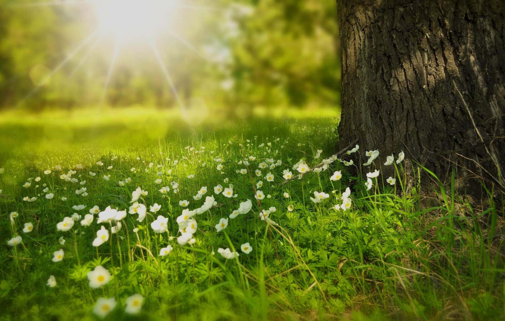 spring-darker